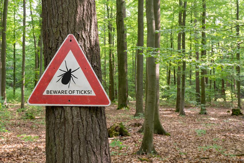 Preparaty na kleszcze i komary - zabezpiecz się przed nimi!